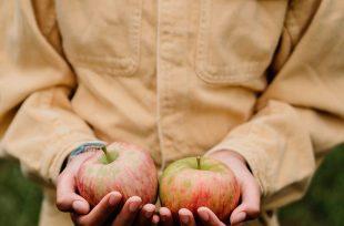 Ceci est une photo utilisée par NaGa Conseil pour présenter ses prestations d'accompagnement à destination des agriculteurs.